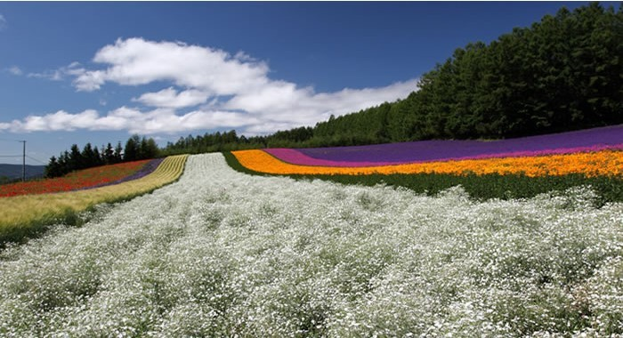 tomita-farm-image2