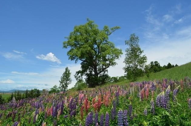 北海道ガーデンショー