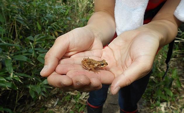 lake-rausu-frog