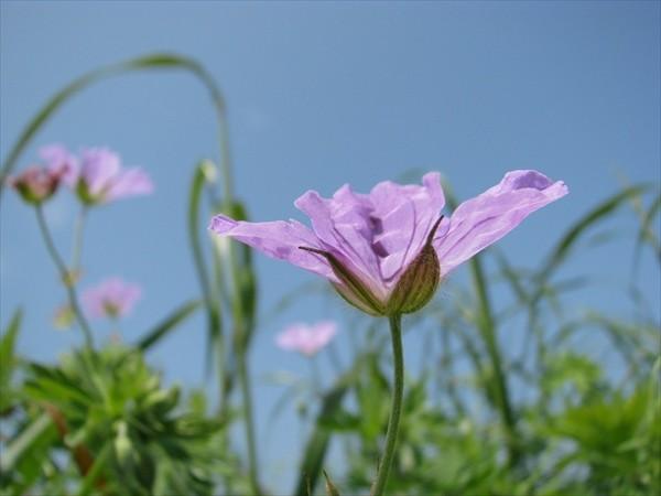 notsuke-flower-20-1