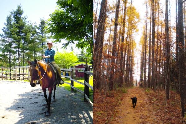 Clark Horse Garden