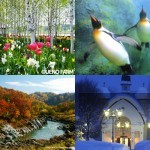 旭山動物園&注目の見どころ!旭川おすすめ観光スポット7選
