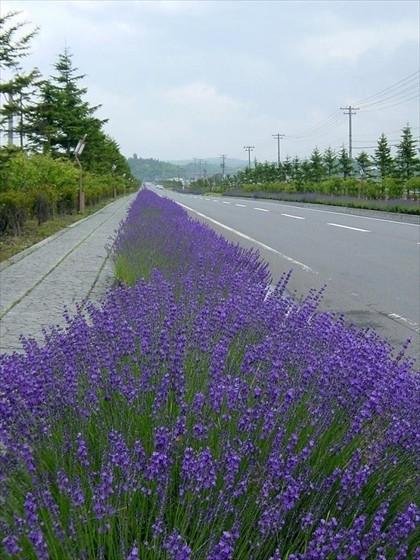 ガーデン街道イメージ