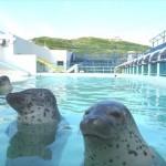 北海道のおすすめ水族館7選!北海道ならではの魅力いっぱい♪