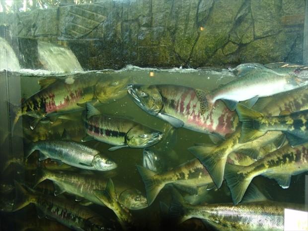 北海道の水族館イメージ