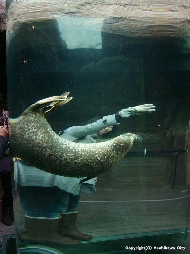 旭山動物園の行動展示