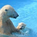 北海道で行きたい人気おすすめ動物園・動物スポット8選!