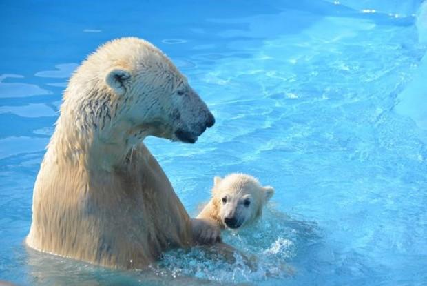 北海道の動物園のクマたち