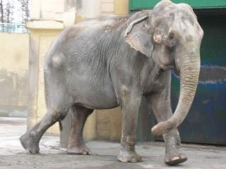 おびひろ動物園のゾウ