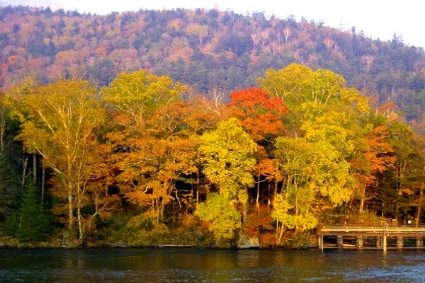 Autumn Leaves of Lake Akan