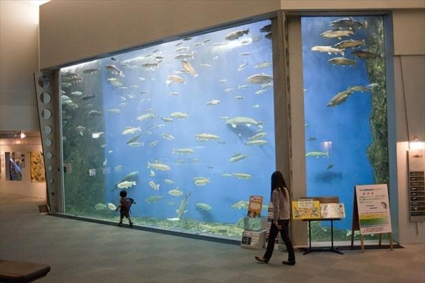 千歳水族館