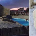 夏のわくわくイベント♪札幌・夜の円山動物園に行ってきました!
