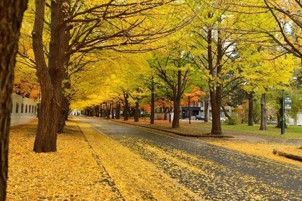 札幌周辺の絶景紅葉スポット