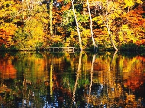 大沼公園の秋