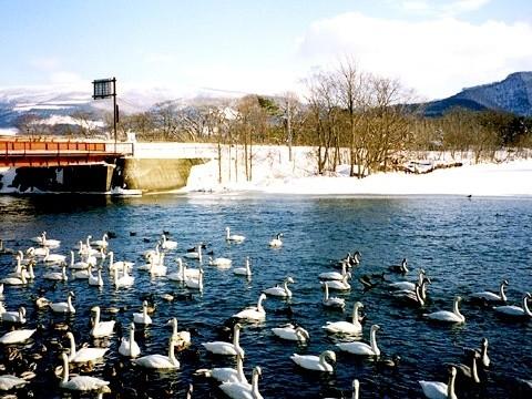 大沼公園の冬