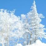 たっぷりの雪&パウダースノーに満足!キロロスキー場の魅力!