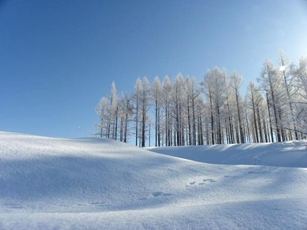冬の富良野の愉しみ方と魅力