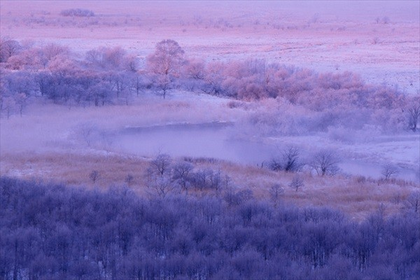 Kushiro Marsh in Winter