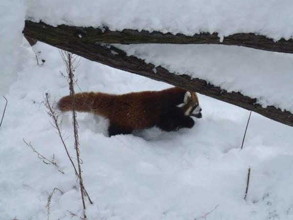 冬の円山動物園のみどころ