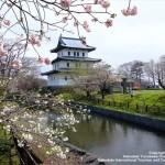 北海道で桜に感動!地元民が教える人気桜・お花見スポット8選!