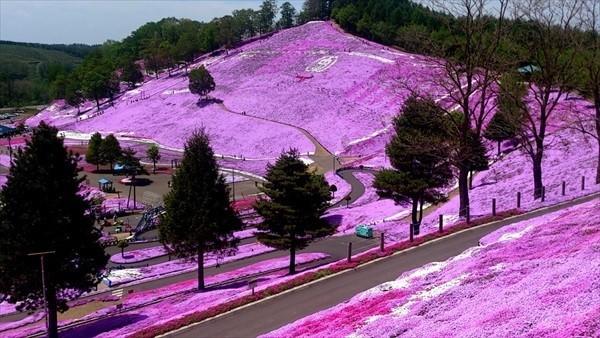 北海道芝桜スポット