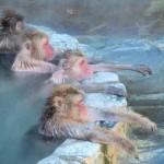 北海道の「お猿の温泉」はココ♪函館市熱帯植物園の魅力!