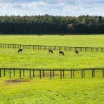 馬のふるさと、日高|初めての方におすすめの観光スポット10選