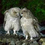 野生動物のパラダイス!北海道で会いたい♪野生動物9選!