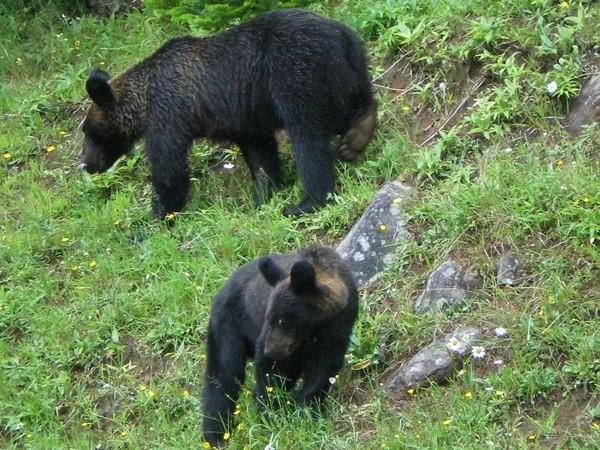 hokkaido wild animals