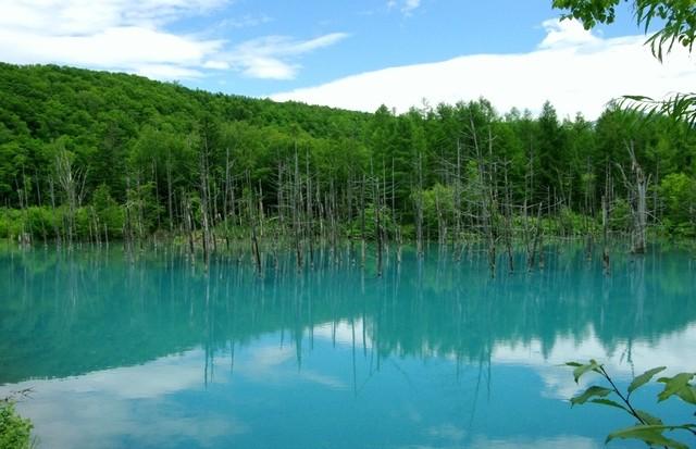 【一度は見たい絶景!】美瑛・青い池の四季の魅力と行き方!