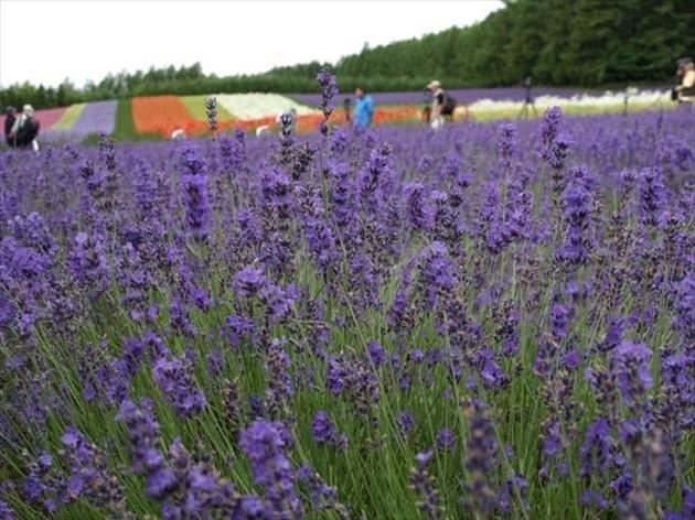 7月北海道観光スポット