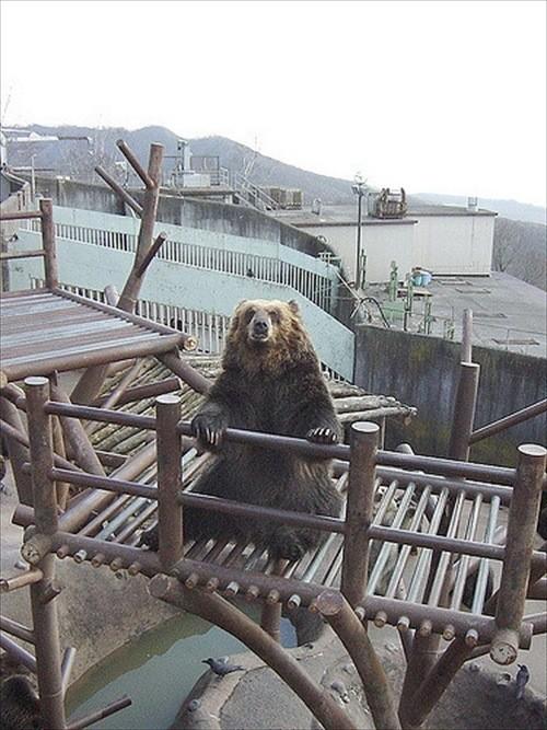 Noboribetsu Bearpark