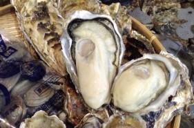 1年中食べられる!厚岸(あっけし)の美味しい牡蠣を食べに行こう