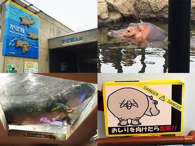 旭山動物園 カバ