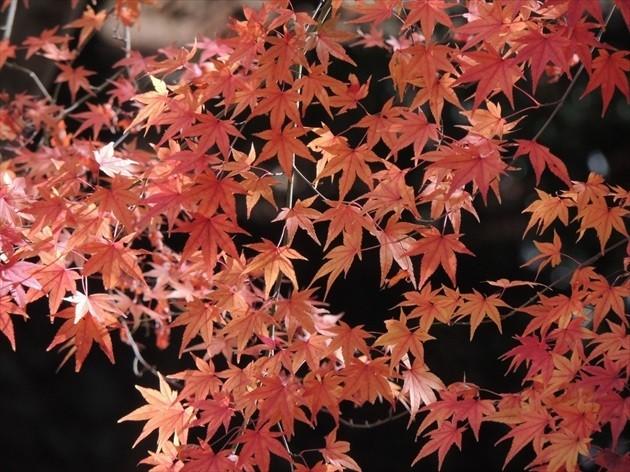 北海道9月のみどころ