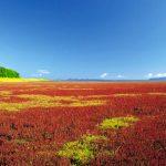 ひとあし早い秋を楽しむ旅♪北海道、9月の見どころ、教えます!