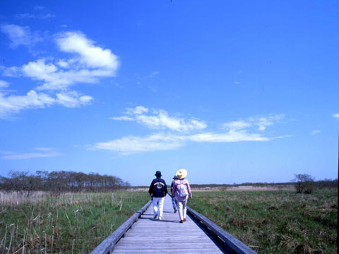 Kushiro Marsh Boardwalk
