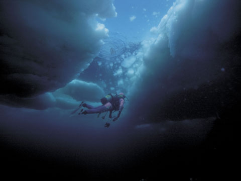 知床 流氷ダイビング