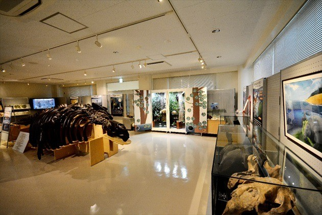 札幌市博物館活動センター 施設内イメージ