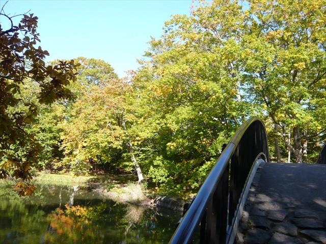 八つ橋と紅葉