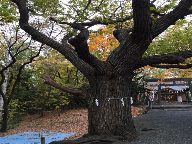 もっと知りたい札幌!地下鉄一日乗車券で神社巡り