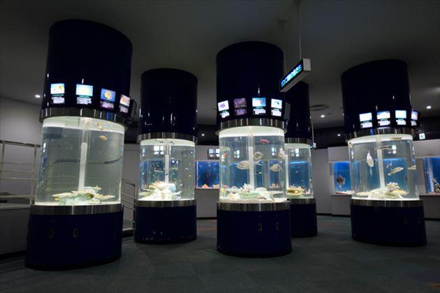 サンピアザ水族館の水槽