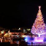 海に浮かぶ巨大なツリー!はこだてクリスマスファンタジー2016