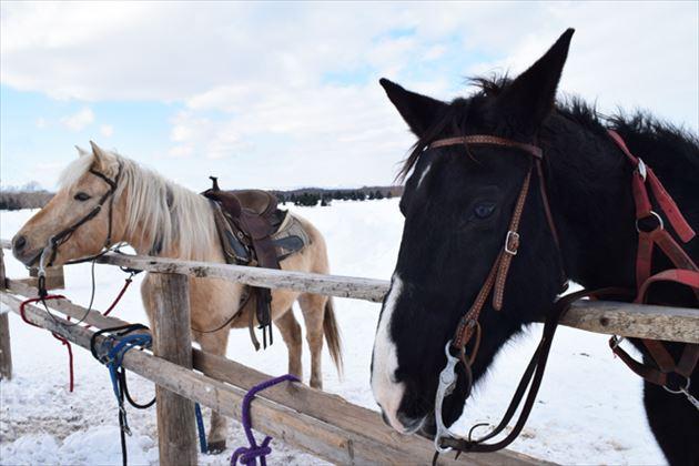 雪上乗馬イメージ