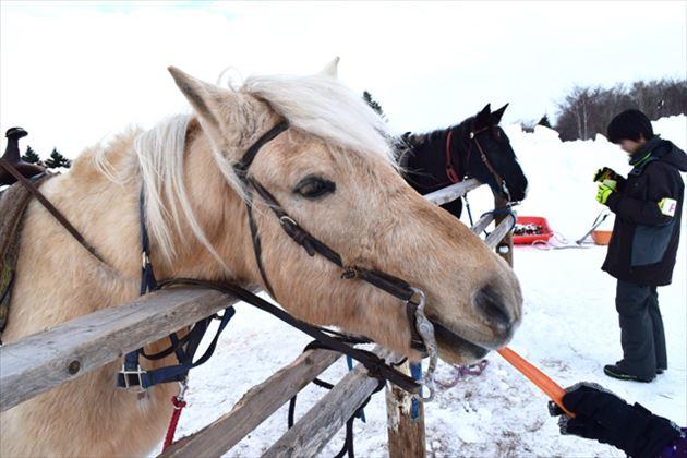 ノース・スノーランドin千歳の馬