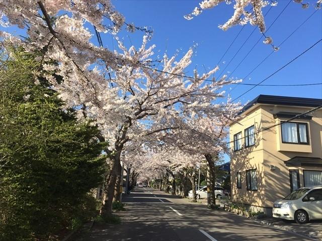 桜が丘通1