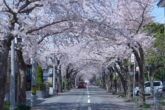 桜が丘通2