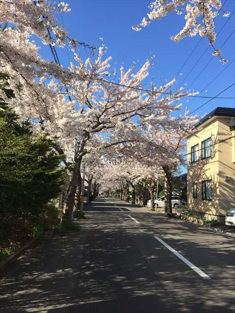 桜が丘通3
