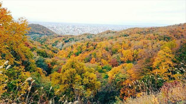 札幌紅葉 イメージ