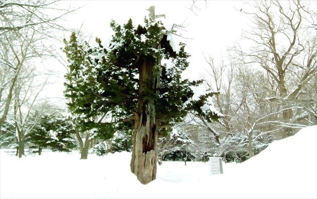樹木ヒーリングスポット イメージ